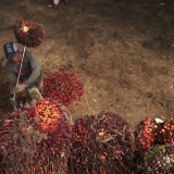 The great palm oil scandal: labor abuses behind big brand names