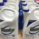 Bayer's Monsanto is being sued by 8,000 plaintiffs